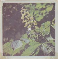 Cover Boney M. - Bahama Mama