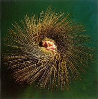 Cover Peter Gabriel - Ovo - The Millennium Show