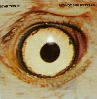 Cover Red Hot Chili Peppers - Scar Tissue