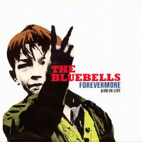 Cover The Bluebells - Forevermore