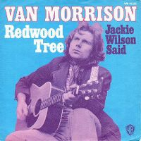 Cover Van Morrison - Redwood Tree